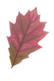 Hoja roja como símbolo del otoño Imagen de archivo libre de regalías