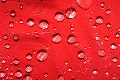 Hoja roja con gotas del agua Imagen de archivo