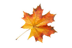 Hoja roja del otoño Imagenes de archivo