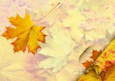 Hoja roja del otoño Foto de archivo libre de regalías