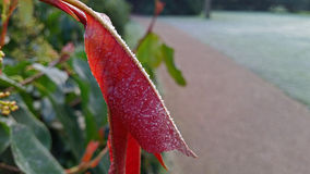 Hoja roja que calienta en la salida del sol Fotos de archivo libres de regalías