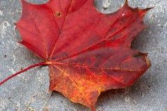 Hoja roja y amarilla Imagen de archivo libre de regalías