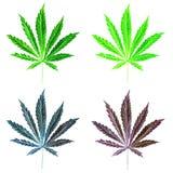 Hoja sativa del cáñamo verde claro pintada en acuarela Dé el ejemplo exhausto de la marijuana aislado en el fondo blanco EL del d ilustración del vector