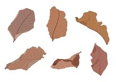 Hoja seca Brown inconsútil y caída de las hojas a la tierra stock de ilustración