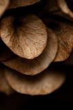 Hoja seca de Brown Foto de archivo libre de regalías