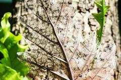 Hoja seca del marrón del decaimiento Fotografía de archivo