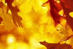 Hoja seca del otoño imagenes de archivo