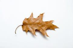 Hoja seca del otoño Foto de archivo