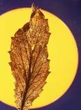 Hoja seca delante del sol Fotos de archivo libres de regalías