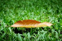 Hoja seca en hierba del césped Fotografía de archivo