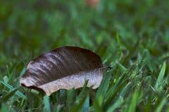 Hoja seca en la hierba Fotografía de archivo libre de regalías