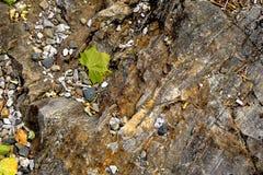Hoja seca en la tierra Foto de archivo
