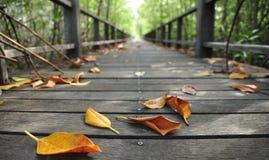 Hoja seca en las tarjetas de madera Fotografía de archivo libre de regalías