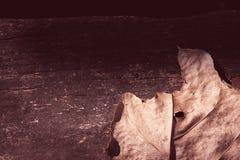 Hoja secada en de madera decaída Imágenes de archivo libres de regalías