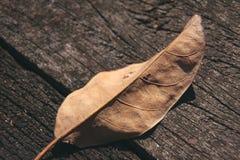 Hoja secada en piso de madera decaído Imágenes de archivo libres de regalías