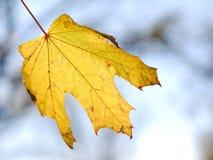 Hoja sola del otoño Foto de archivo