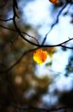 Hoja sola del otoño Imágenes de archivo libres de regalías