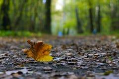 Hoja sola del otoño en el pavimento Fotos de archivo