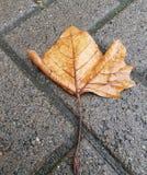 Hoja sola en el camino Foto de archivo libre de regalías