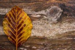 Hoja solitaria del otoño en la madera Fotografía de archivo