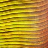 Hoja tropical Foto de archivo libre de regalías
