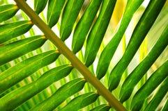 Hoja tropical Foto de archivo