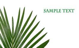 Hoja tropical con el espacio para su texto Fotos de archivo libres de regalías