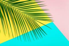 Hoja tropical en fondo en colores pastel fotografía de archivo