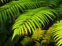 Hoja verde Foto de archivo