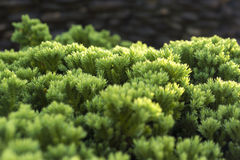 Hoja verde Foto de archivo libre de regalías