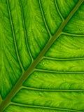 hoja verde Imagen de archivo
