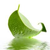 Hoja verde. Imagen de archivo libre de regalías
