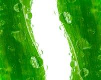 Hoja verde. Fotos de archivo