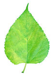 hoja verde imágenes de archivo libres de regalías