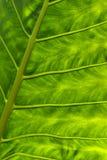 Hoja verde abstracta Imagen de archivo