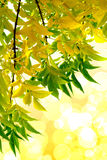 Hoja verde. Aislamiento en el blanco. Foto de archivo