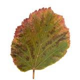 hoja Verde-amarilla como símbolo del otoño Imagen de archivo libre de regalías