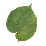 hoja Verde-amarilla como símbolo del otoño Foto de archivo