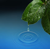 Hoja verde con caer del descenso del agua Foto de archivo libre de regalías