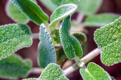 Hoja verde con con los puntos Foto de archivo libre de regalías