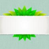 Hoja verde con el fondo de papel Fotos de archivo