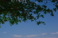 Hoja verde con el fondo del cielo azul de la nube fotos de archivo