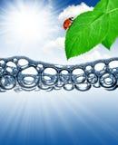 Hoja verde con el ladybug Imágenes de archivo libres de regalías