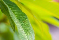 Hoja verde con gota fotos de archivo libres de regalías