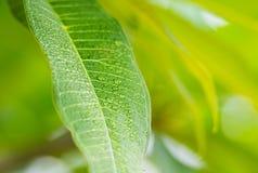 Hoja verde con gota fotos de archivo