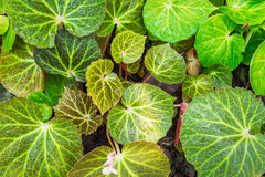 Hoja verde con gota fotografía de archivo