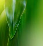 Hoja verde con gota del agua foto de archivo libre de regalías
