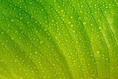 Hoja verde con gotas Imagenes de archivo