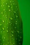Hoja verde con gotas Fotos de archivo libres de regalías