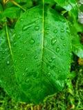 hoja verde con gotas del agua